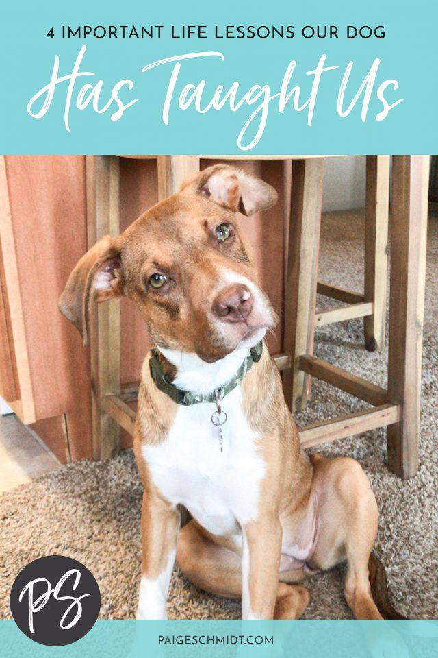 I learn something new from/about our dog Abby everyday. I hope you enjoy this post, where I share 4 important life lessons our dog Abby has taught us.
