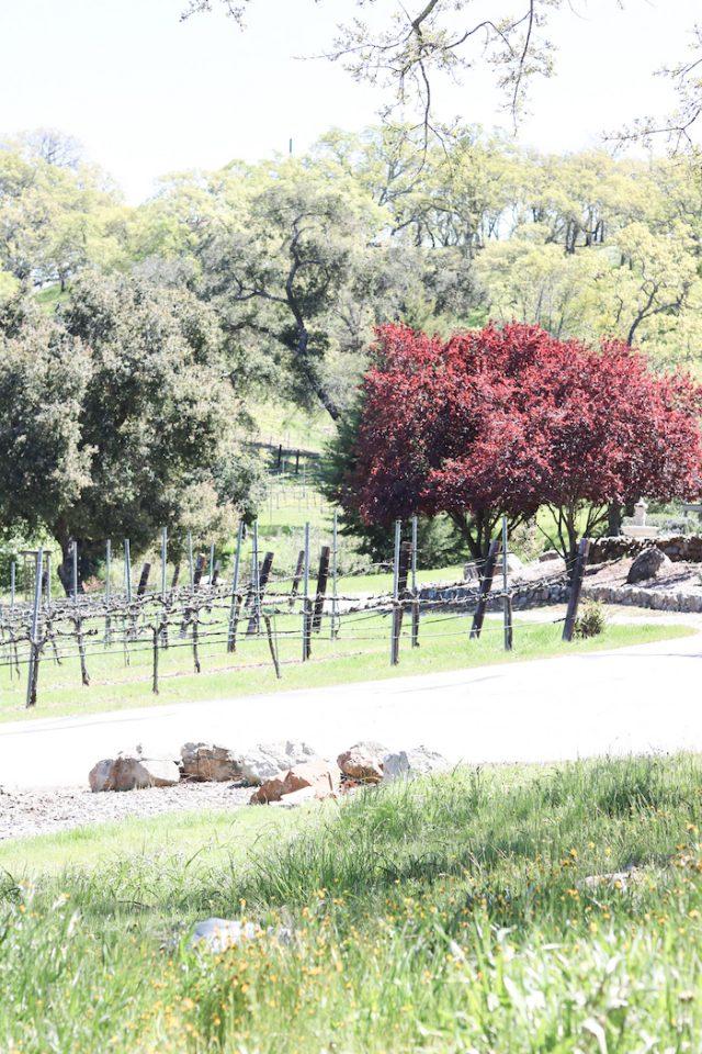 The Vineyard in SLO